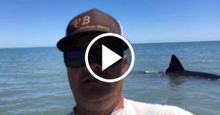 Encuentran un enorme tiburón blanco en una playa de California