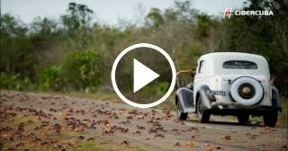 El impresionante viaje de cangrejos hacia la Bahía de Cochinos