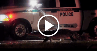 Cocodrilo se pasea tranquilo y escoltado por la policía en Miami
