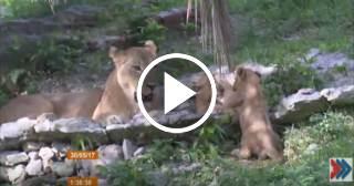 Crece la población del Jardín Zoológico de La Habana