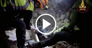 Rescatan a Ulisse, el perro que estuvo sepultado vivo entre escombros del terrremoto en Italia