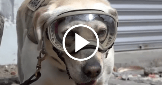 Frida, la perrita mexicana que ha encontrado a más de una decena de sobrevivientes bajo los escombros