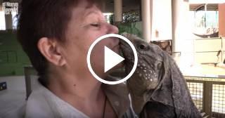 Una cerdita bilingüe y una iguana balsera en el parque zoológico Jungle Island de Miami