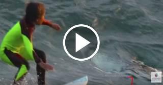 Niño surfista no se dio cuenta de que compartía la ola con un tiburón