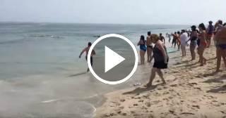 Pánico en una playa estadounidense luego de que un tiburón atacara a una foca