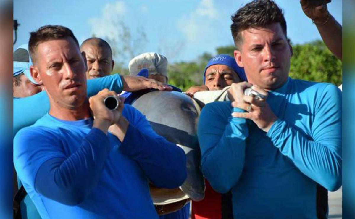 Evacuan en helicóptero a los delfines de Cayo Guillermo por huracán Irma (VÍDEO)