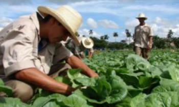 Cuba compra a EEUU alimentos y productos sanitarios por valor de 78 millones de dólares en los primeros meses de 2017